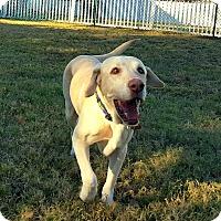 Adopt A Pet :: Niblet - Coppell, TX