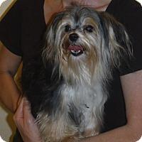 Adopt A Pet :: MiMi - Manchester, NH