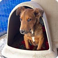 Adopt A Pet :: Walter - Aurora, CO