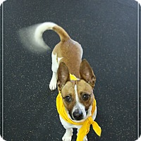 Adopt A Pet :: Buddy - Rockwall, TX