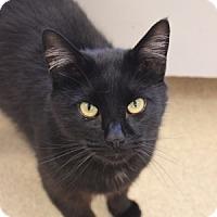 Adopt A Pet :: Jaqen - Naperville, IL