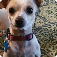 Adopt A Pet :: Trilby - Houston, TX