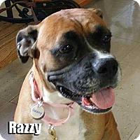 Adopt A Pet :: Razzy - Encino, CA