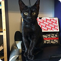 Adopt A Pet :: .Midnight - Baltimore, MD