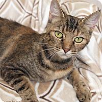 Adopt A Pet :: Lana - St Louis, MO