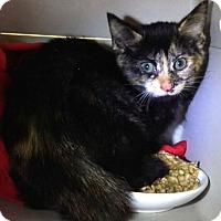 Adopt A Pet :: Peek-a-Boo - Kalamazoo, MI