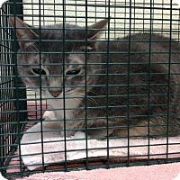 Adopt A Pet :: Traveler - Janesville, WI