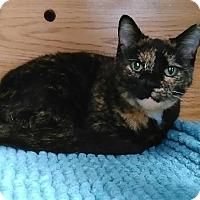 Adopt A Pet :: Bambi - Austintown, OH