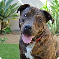 Adopt A Pet :: Pinta - Los Angeles, CA
