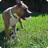 Adopt A Pet :: Dexter - Killeen, TX