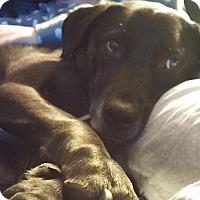 Adopt A Pet :: Buckley - Surrey, BC