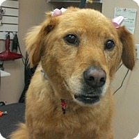 Adopt A Pet :: Mary Jane - St Louis, MO