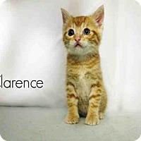 Adopt A Pet :: *CLARENCE - Sugar Land, TX
