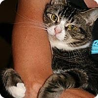 Adopt A Pet :: Belvedere - Centreville, VA