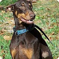 Adopt A Pet :: Sammy - Madison, WI