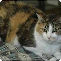 Adopt A Pet :: Gabby - Pendleton, OR