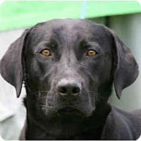 Adopt A Pet :: Arnie-in MAINE! - kennebunkport, ME
