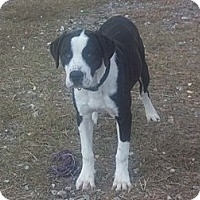 Adopt A Pet :: MAXIMUS - Fort Valley, GA