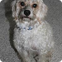 Adopt A Pet :: J.D. - Houston, TX