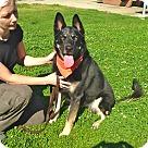 Adopt A Pet :: Pretty Georgia