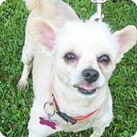 Adopt A Pet :: Rex - Oberlin, OH