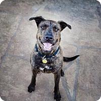 Adopt A Pet :: Hudson - Tucson, AZ