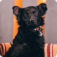 Adopt A Pet :: Funny - Portland, OR
