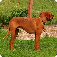 Adopt A Pet :: Leo - Prole, IA