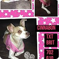 Adopt A Pet :: Cinnabon - Las Vegas, NV