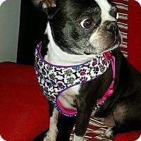 Adopt A Pet :: Honey Booboo - Weatherford, TX