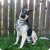 Adopt A Pet :: Cooper - Pleasant Grove, CA