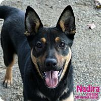 Adopt A Pet :: Nadira - Santa Maria, CA