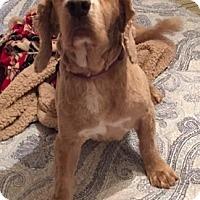 Adopt A Pet :: Finnegan-ADOPTION PENDNG - Sacramento, CA