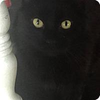 Adopt A Pet :: Cam - Morganton, NC