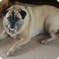 Adopt A Pet :: Sheila - Ogden, UT