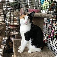 Adopt A Pet :: Diva and Duke - Redwood City, CA