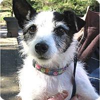 Adopt A Pet :: Rudy - Salem, OR