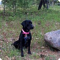 Adopt A Pet :: Ethel - Tomah, WI