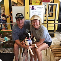 Adopt A Pet :: Zani - Weatherford, TX