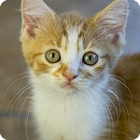 Adopt A Pet :: Theon - Chicago, IL