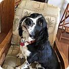 Adopt A Pet :: Jacco