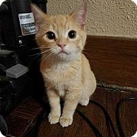 Adopt A Pet :: Dean - South Bend, IN