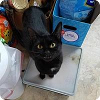 Adopt A Pet :: Ebony - Irwin, PA