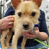 Adopt A Pet :: Tyson - Plainfield, IL