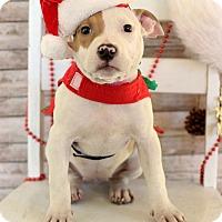 Adopt A Pet :: Paula - Waldorf, MD