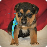 Adopt A Pet :: Mario ~ ADOPTED! - Allentown, PA