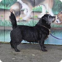Adopt A Pet :: Chrissy - Woodburn, OR