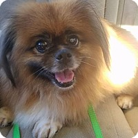 Adopt A Pet :: King Louie - Melbourne, FL