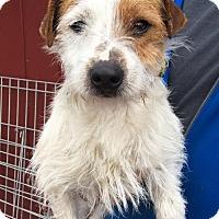 Adopt A Pet :: Milo - Clarkston, MI