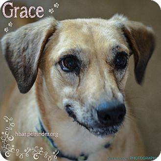 German Shepherd Dog/Dachshund Mix Dog for adoption in Bedford, Texas - Grace